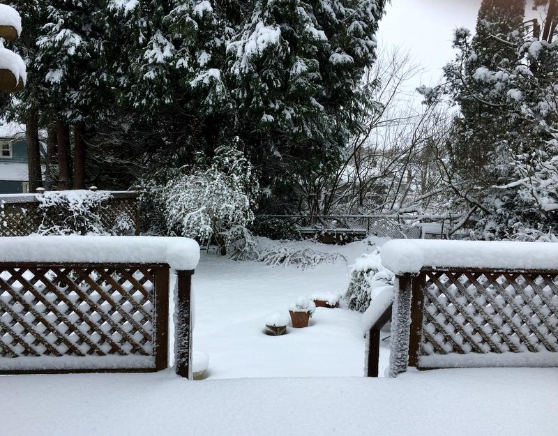 Jan 2017 snow backyard